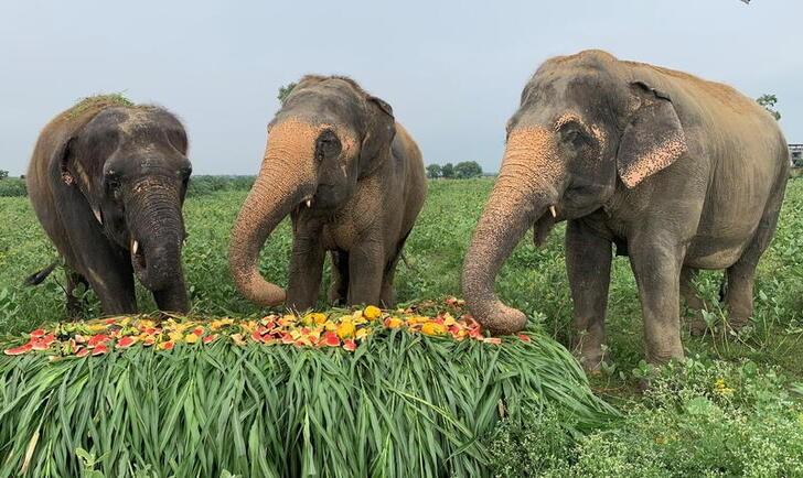Día Mundial del Elefante: ¿por qué se festeja?  | Animales