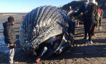 Encontraron una ballena muerta en Chubut: por qué piden no acercarse    Chubut