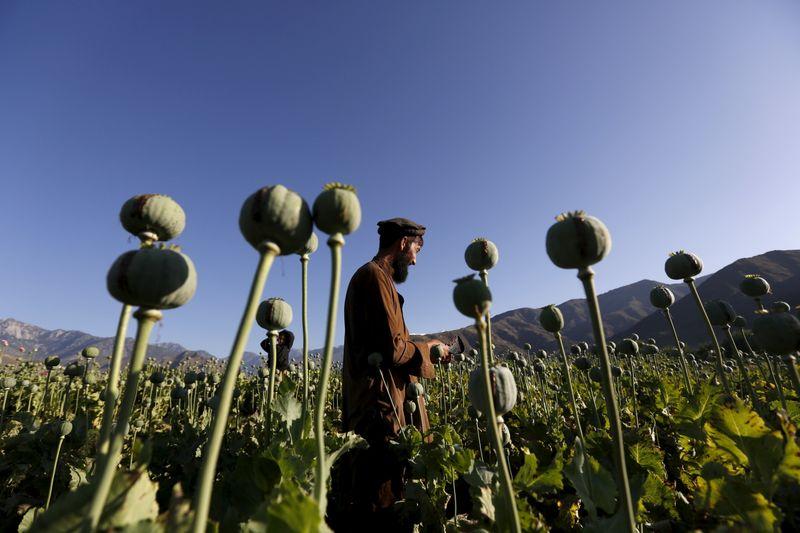 Ganancias y opio: el comercio de drogas en Afganistán es una ventaja para los talibanes   Crisis en afganistán