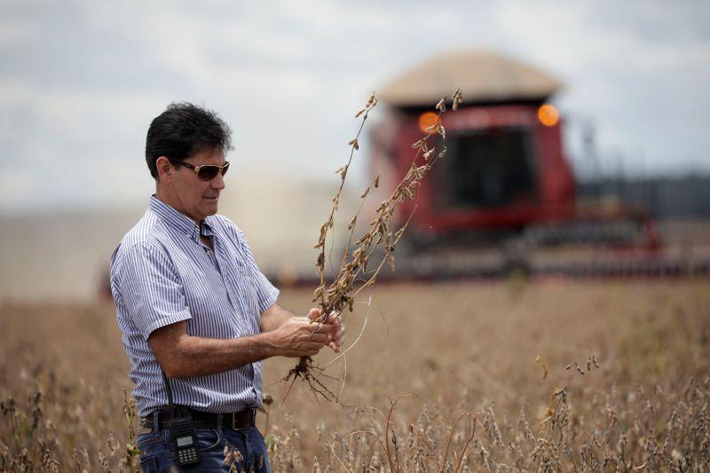 Envían al Congreso un proyecto con incentivos para la agroindustria   Campo
