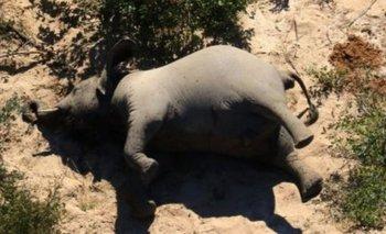 La muerte masiva de elefantes que desconcierta a los especialistas   Animales