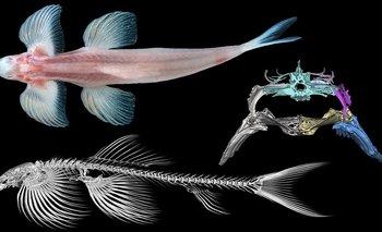 Un estudio descubre 11 especies de peces capaces de caminar   Animales