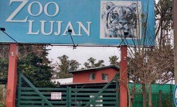 Zoo de Luján: la investigación que devela el maltrato animal | Archivo