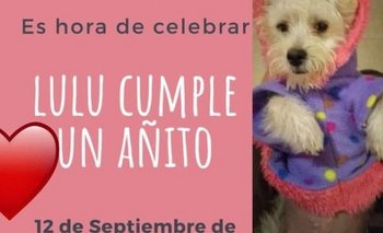 Apartaron a funcionaria que festejó el cumpleaños de su perro | Coronavirus en argentina