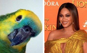 Furor por el video del loro que canta como Beyoncé | En redes