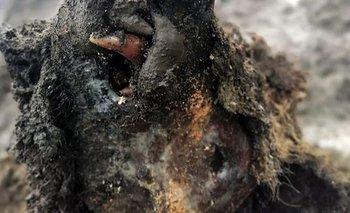 Impresionante hallazgo de un oso de las cavernas congelado | Rusia