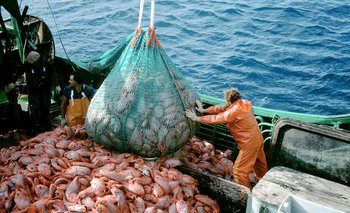 El Senado sancionó una ley para proteger los recursos pesqueros | Crisis económica