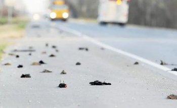 Misterio: cayeron miles de pájaros muertos en Estados Unidos | En redes
