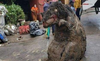 La verdad detrás del hallazgo de la rata gigante en Mexico | Fenómenos naturales