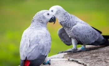 Aíslan a dos loros por insultar al resto de los animales de un zoo | Animales