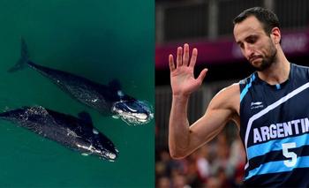 El video viral de las ballenas que sorprendió hasta a Ginóbili | Virales