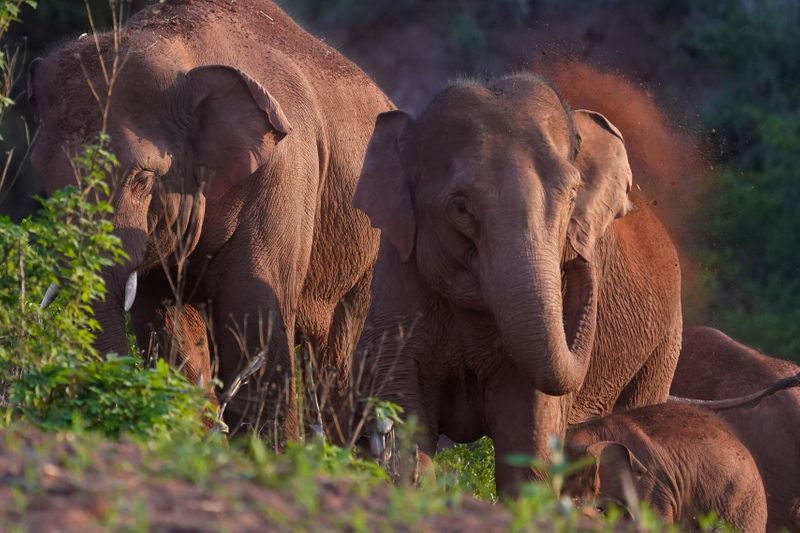 Rescatan a bebé elefante en China después de ser separado de la manada   Animales