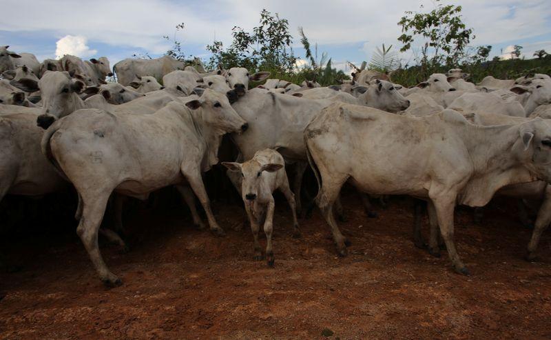 Vaca loca: China esperan pronta reanudación de comercio con Brasil    Carne
