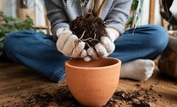 ¿Están tus plantas contribuyendo al calentamiento global? | Información general
