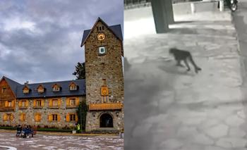 El video del puma en Bariloche que sorprendió en pleno centro | Bariloche