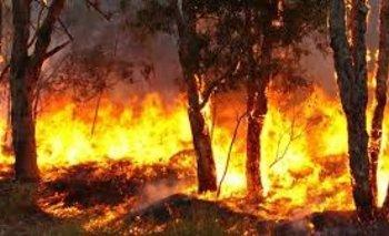Incendios en Corrientes: las llamas llevan ya más de un mes  | Incendio forestales