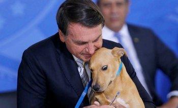 Insólito: Bolsonaro hizo firmar una ley a un perro   Brasil