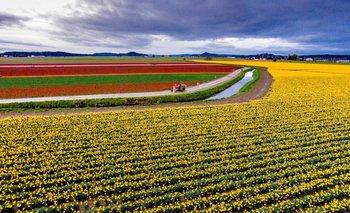 Tiempo de innovación agropecuaria: ¿Cómo anotarse a la Expoagro? | Expoagro