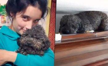 La historia de Benito, el perro que no puede olvidar a su dueña | Viral