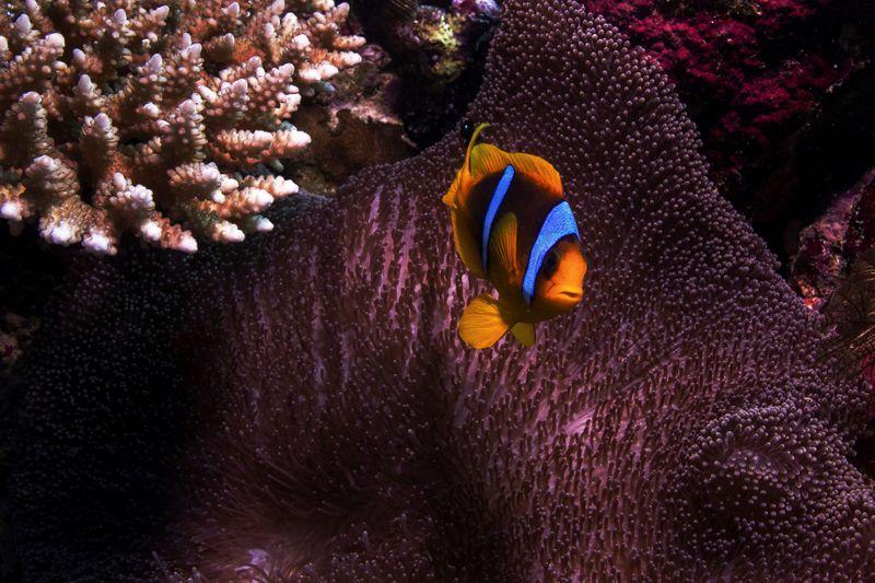 Cambio climático está matando arrecifes de coral mundiales    Cambio climático