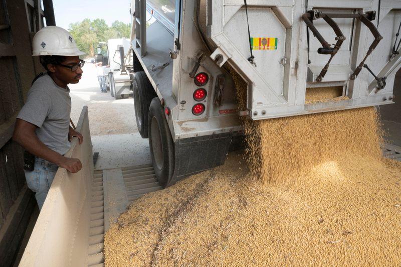 La soja cae por las expectativas de un buen informe de producción estadounidense   Mercados