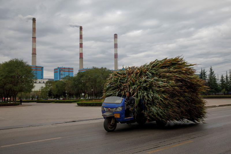 China recorta estimación de cosecha de maíz tras lluvias en región norte   Campo
