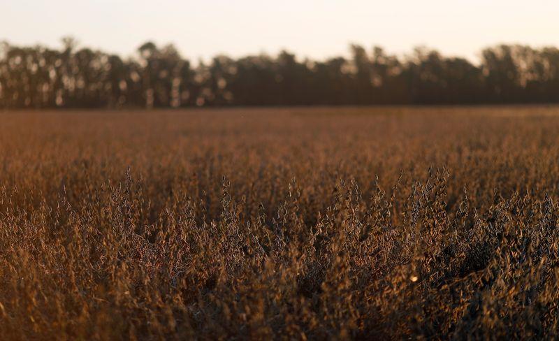 El campo lleva vendido 31,5 millones de toneladas de soja   Campo