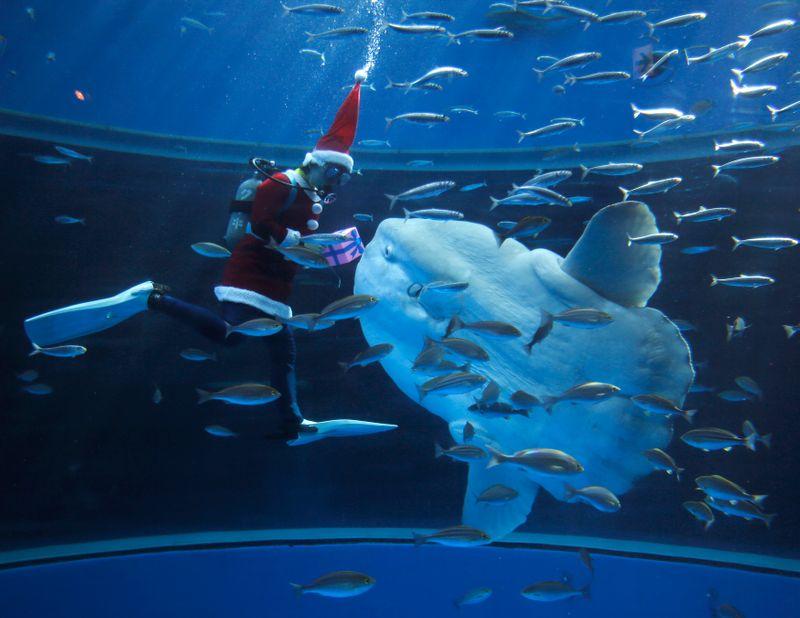 Pescan un extraño pez de 2 toneladas que asombra a los especialistas | Animales