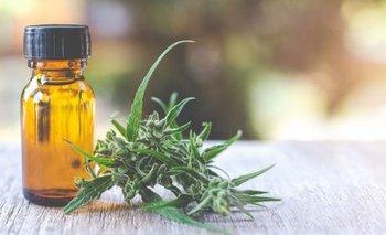 Cada vez más municipios autorizan el uso medicinal del cannabis | Cannabis