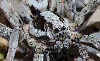 Cómo es la espeluznante araña que desintegra los órganos de sus víctimas | Fenómenos naturales