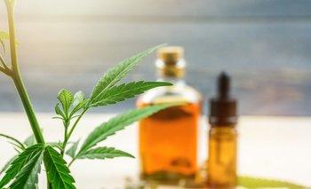 Aceite de Cannabis: Cómo prepararlo en casa? | Información general