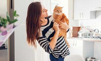 Una investigación revela cómo mejorar la relación con los gatos | Animales