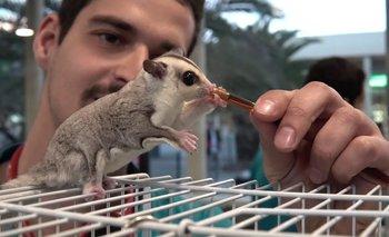 Córdoba: encontraron un extraño animal proveniente de Australia | Fenómenos naturales