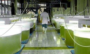 Diaser frena producción de biocombustible y hay 2000 empleos en riesgo | Energía