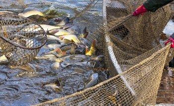 """La pesca cerrará el 2020 con un nivel de productividad """"normal""""   Reactivación económica"""