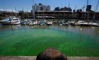 ¿Por qué el agua de Puerto Madero está verde? | Puerto madero