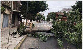 Temporal: cayó una antena gigante en Avellaneda y decenas de árboles en CABA y el Conurbano | Información general