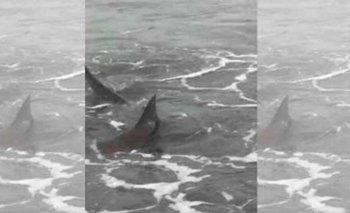 Pánico: aparecieron tiburones en la costa argentina | Costa atlántica