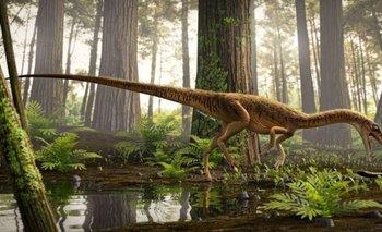 Descubrieron en Brasil al antepasado del Tyrannosaurus Rex | Dinosaurios