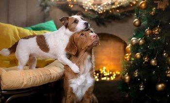 Consejos para cuidar a tus mascotas de la pirotecnia en Navidad | Navidad